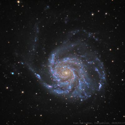 Галактика Вертушка (M101). - астрофотография