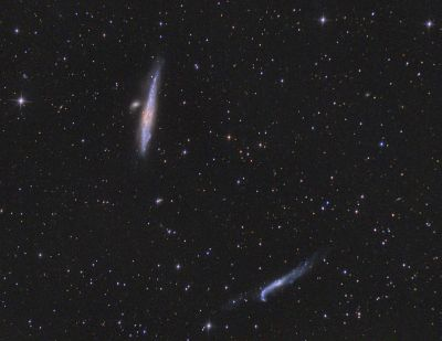 NGC 4631 (Галактика Кит) NGC 4656 (Галактика Лом) - астрофотография