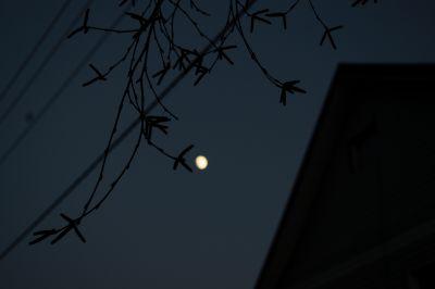 Луна 8 декабря 2019 года.  - астрофотография