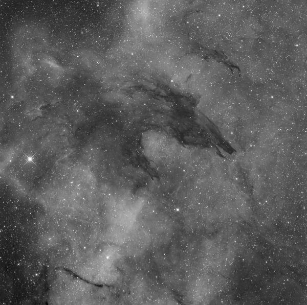 Space bear - астрофотография
