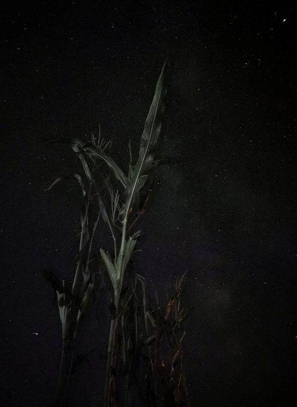 Ночной эксперимент  - астрофотография